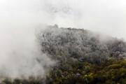 تصویر | بارش برف بهاری در جنگلهای هیرکانی