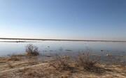 آبگیری کامل تالاب بندعلیخان ورامین با بارشهای بهاری