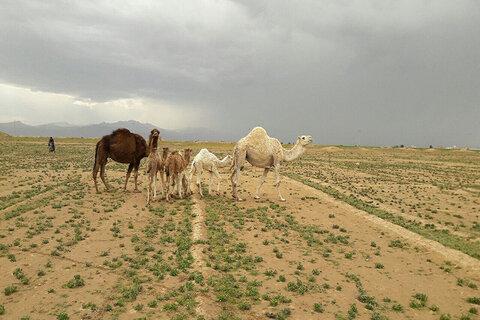 بارش بهاری در کویر