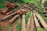 عامل قطع درختان در چرداول شناسایی شد