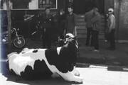 فیلم و تصویر | واکنش بانک ملی به اقدام عجیب یک بدهکار قمی | ماجرای گاوی که خبرساز شد
