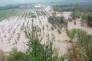کمک بلاعوض به خسارت دیدگان سیل در نیریز