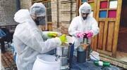 توزیع آبمیوه صلواتی در روزهای کرونایی