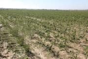 سیل در باخرز خراسان رضوی ۵۷ میلیارد ریال خسارت به بارآورد
