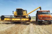 ۴۵۰ هزار تن گندم در اردبیل خریداری میشود
