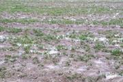 خسارت ۲۴۲ میلیارد ریالی سیل به کشاورزان خراسان شمالی