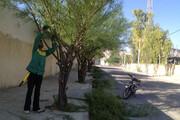 کرج  | هرس درختان سوزنیبرگ