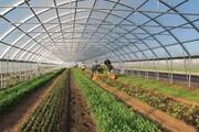 ۳۵۰ هکتار گلخانه امسال در پارس آباد بهرهبردرای میشود