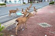 تصاویر شگفتانگیز حضور حیوانات در شهرها در قرنطینه انسانی