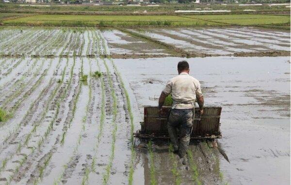نشا برنج