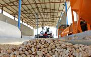 پیمان ارزی؛ مانع صادرات پسته رفسنجان