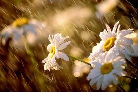 بارش پراکنده باران در برخی استانها   خیزش گرد و خاک در نوار شرقی کشور
