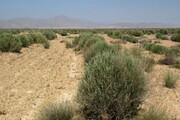۲۵۰ میلیارد تومان سهم سیستان و بلوچستان برای بیابانزدایی