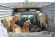 بهرهبرداری از کمپ نگهداری سگهای ولگرد در یزد