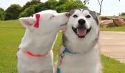 فیلم | هیجان دو سگ پس از یک ماه جدایی