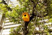 درختان شهر اراک میزبان پرندهها شد