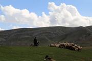 اخطار برای خروج دامهای باقی مانده در ییلاقات طالقان