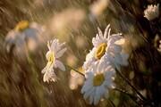 افزایش ۵۸ درصدی بارش باران در استان قزوین
