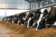 تولید سالانه بیش از ۴۰ هزار تن خوراک دام و طیور در اشنویه