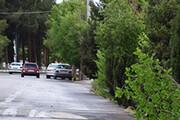 طوفان سبب تخریب ۲ منزل مسکونی و قطع چند درخت شد