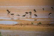 تصویر   تالاب حوض مرده؛ بهشت پرندگان مهاجر