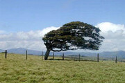 هشدار هواشناسی   وزش باد شدید خراسان رضوی را فرا میگیرد