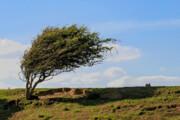 پیشبینی وزش باد شدید در آذربایجانغربی