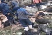 فیلم | اصابت صاعقه به گله گوسفندان در روستای «نبی کندی» تکاب