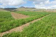 اجرای ۲۶ طرح اقتصاد مقاومتی در بخش کشاورزی قزوین