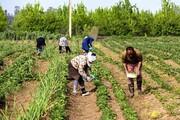 دوام زراعت در اصفهان نیازمند تغییر الگوی کشت