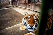 تصویر | باغ وحش بابلسر