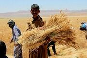 جهش تولید در کشاورزی، فرصتی برای درمان پای لنگ اقتصاد