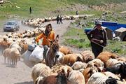 افزایش ۲۰ درصدی تولید گوشت توسط عشایر خراسان شمالی