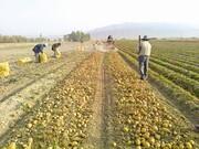 حکایتی تلخ از روزگار سخت کشاورزان جنوب کرمان