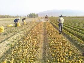 نمک بر زخم کشاورزان جنوب کرمان