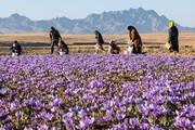 کشاورزی متنوع خراسان رضوی راهی برای ایجاد آگروتوریسم