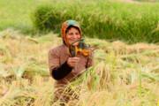 اجرای طرحهای توانمندسازی زنان روستایی و عشایری