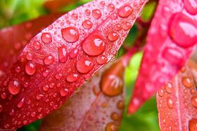 ۵ خرداد   پیشبینی هوای بارانی برای بیشتر نقاط کشور