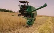 برداشت گندم از مزارع ورامین آغاز شد