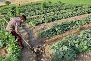 پرداخت ۱۵۱ میلیارد تومان به کشاورزی آذربایجان غربی