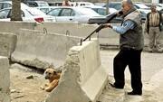 بخشنامه وزارتی برای رعایت حقوق حیوانات از سوی شهرداری ها | با خاطیان برخورد می شود