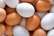 فیلم | افزایش قیمت تخممرغ در یزد