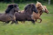 عکس روز | اسبها در مرغزار