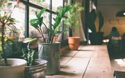 گل و گیاه آپارتمانی؛ شیوه پاکسازی گیاهان از ویروس کرونا