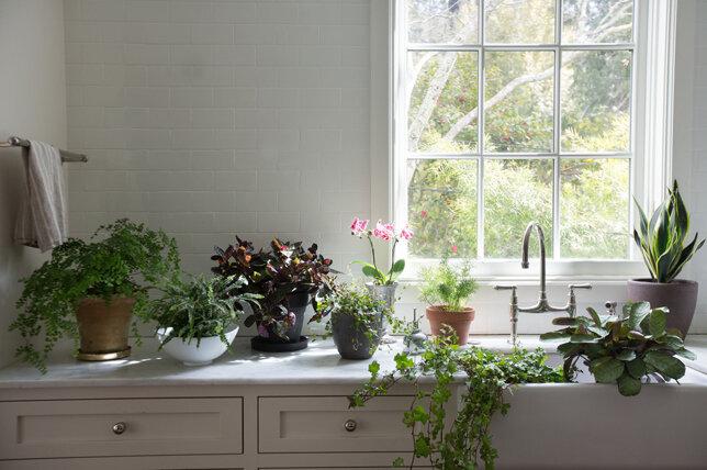 گیاه آپارتمانی - خانه - دکوراسیون