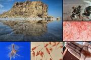 خطر انقراض از بیخ گوش آرتمیا گذشت | تداوم حیات تنها موجود زنده دریاچه ارومیه