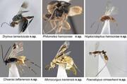 کشف بیش از ۱۰ گونه جدید جانوری در تالاب هامون