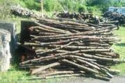 کشف انواع چوب قاچاق و رفع تصرف اراضی ملی در آستارا