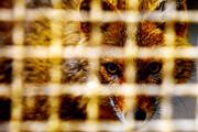 تصویر | باغ وحش اراک