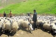 خسارت ۲۱۰ میلیارد تومانی کرونا به کشاورزی و دامداری یزد